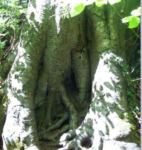 Tree of Life Healing Meditation